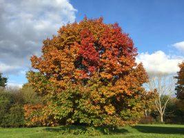 Herbst auf den Poller Wiesen